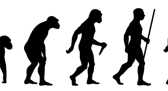 The Evolution of Your Website!